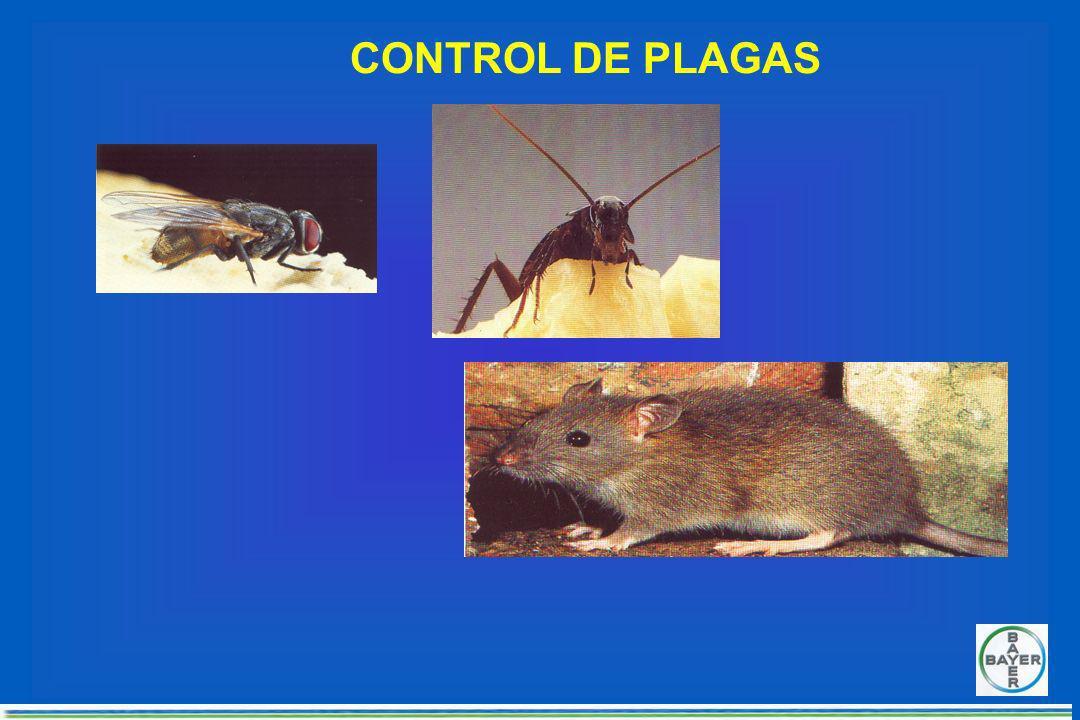 Aplicación de cebos mosquicidas Pintar páneles ó costales Colocarlos cada 10 m 2 Lugares seguros