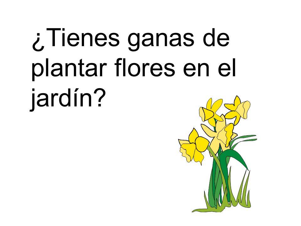 ¿Tienes ganas de plantar flores en el jardín?