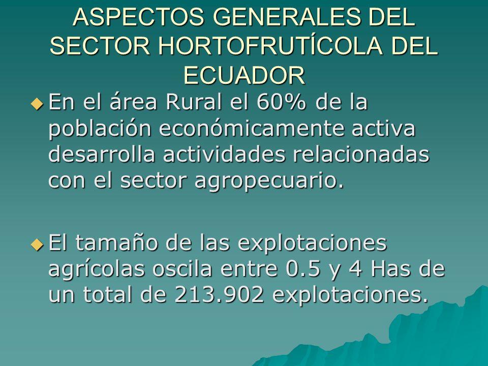 ASPECTOS GENERALES DEL SECTOR HORTOFRUTÍCOLA DEL ECUADOR Durante el periodo 2002 -2003 las exportaciones hortofrutícolas aportan al 4.35 % de las exportaciones agropecuarias Durante el periodo 2002 -2003 las exportaciones hortofrutícolas aportan al 4.35 % de las exportaciones agropecuarias Estados Unidos es el principal mercado de exportación, sin embargo se ha sembrado en la última temporada 600 Has con destino a Europa.