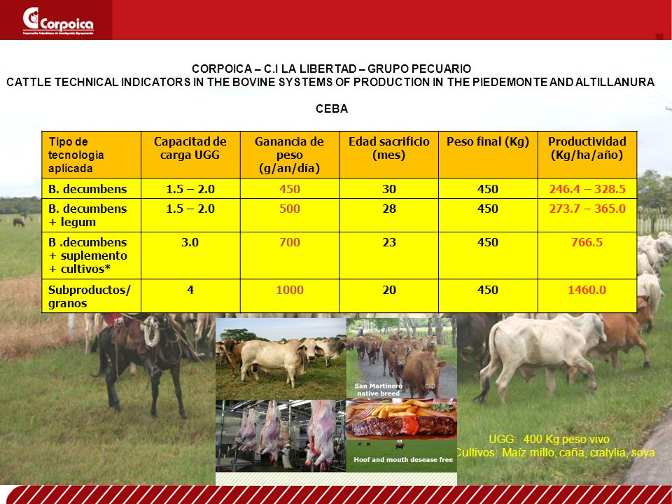 CORPOICA – C.I LA LIBERTAD – GRUPO PECUARIO CATTLE TECHNICAL INDICATORS IN THE BOVINE SYSTEMS OF PRODUCTION IN THE PIEDEMONTE AND ALTILLANURA CEBA Tipo de tecnología aplicada Capacitad de carga UGG Ganancia de peso (g/an/día) Edad sacrificio (mes) Peso final (Kg)Productividad (Kg/ha/año) B.