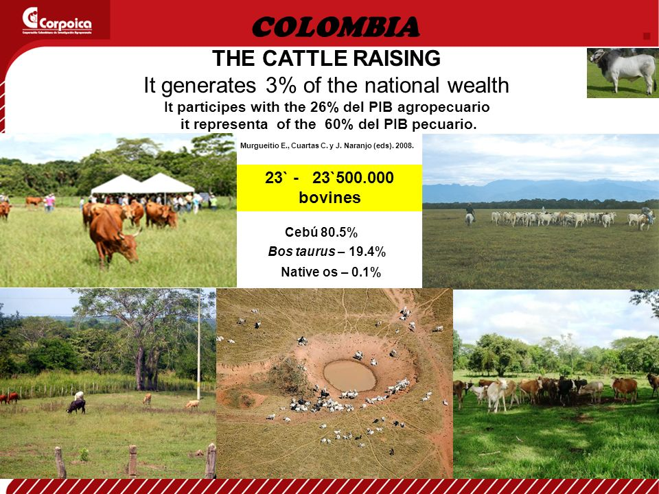 THE CATTLE RAISING It generates 3% of the national wealth It participes with the 26% del PIB agropecuario it representa of the 60% del PIB pecuario.