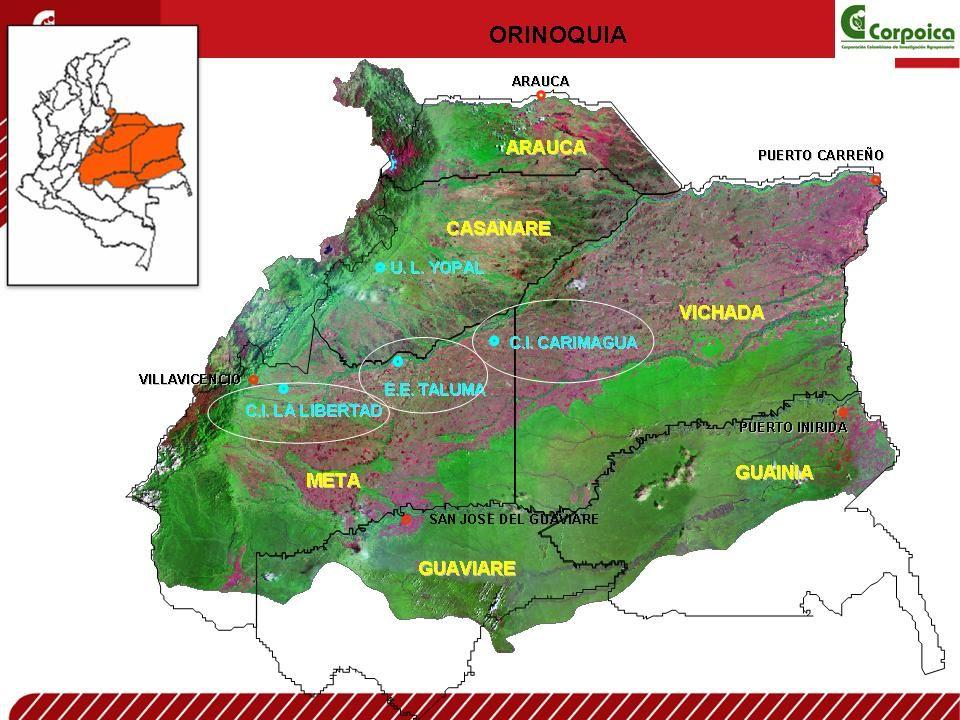Piedemonte llanero 3`723.194 Has Plane Altillanura 4`255.451 Plane Altillanura 4`255.451Has Savanna inundable 6`07 Savanna inundable 6`075.656 has Altillanura disectada 15.000.000 Has ORINOQUIA COLOMBIANA Tº 24-28ºC PRECIPITACIÓN 2.600-3500 mm/año