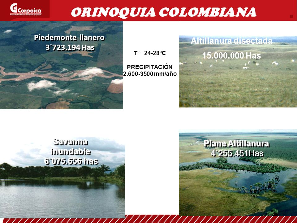 Piedemonte llanero 3`723.194 Has Plane Altillanura 4`255.451 Plane Altillanura 4`255.451Has Savanna inundable 6`07 Savanna inundable 6`075.656 has Altillanura disectada 15.000.000 Has ORINOQUIA COLOMBIANA Tº 24-28ºC PRECIPITACIÓN 2.600-3500 mm/año