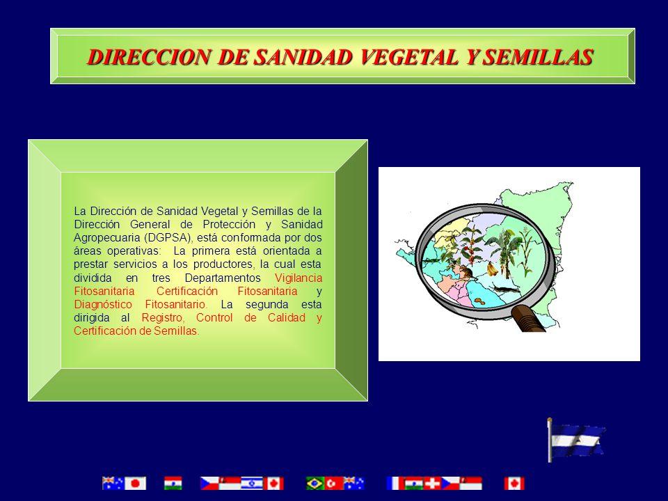 Este esfuerzo ha contado con el apoyo de organizaciones internacionales y/o regionales (BID, IICA, GTZ, FAO, OIRSA) y también con el apoyo de agencias