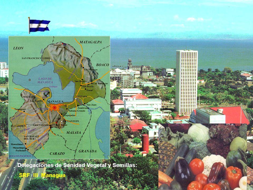 DESARROLLO DE ACTIVIDADES INOCUIDAD ALIMENTOS (VEGETAL)