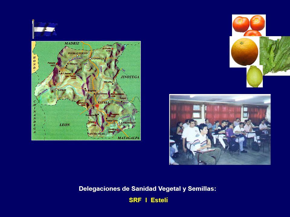 Capacitación central en Managua SRF III Managua