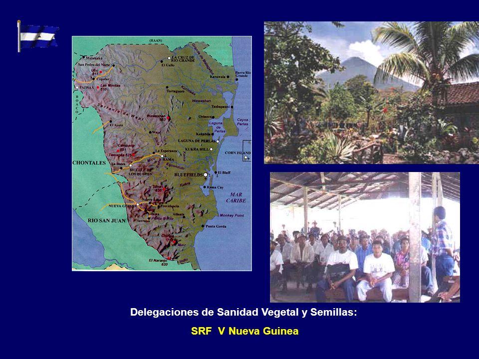 Delegaciones de Sanidad Vegetal y Semillas: SRF I Estelí