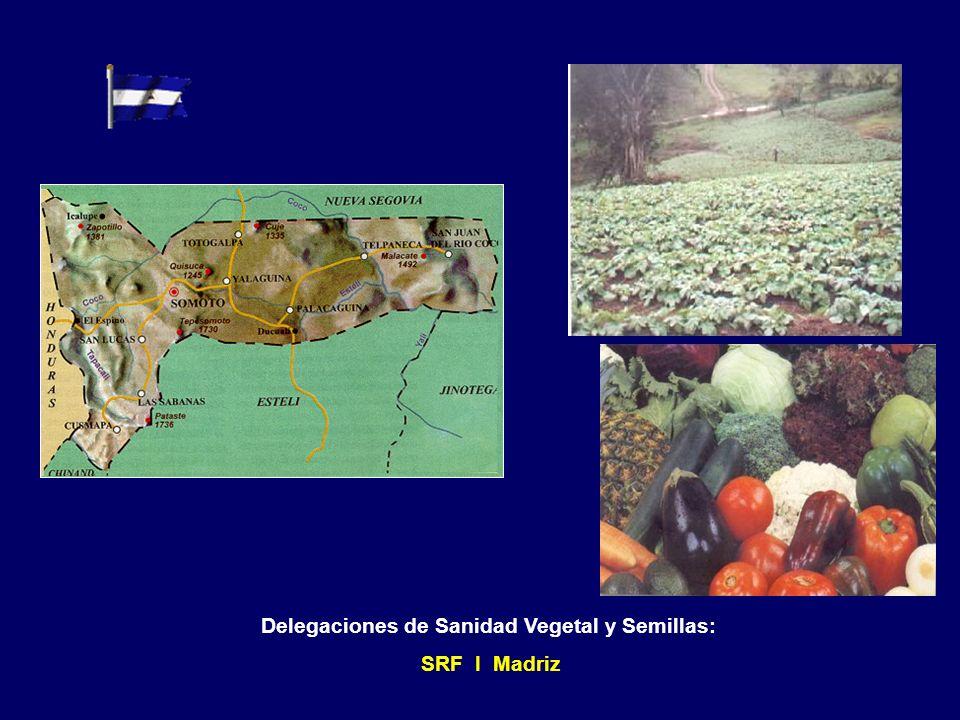 Delegaciones de Sanidad Vegetal y Semillas: SRF V San Carlos