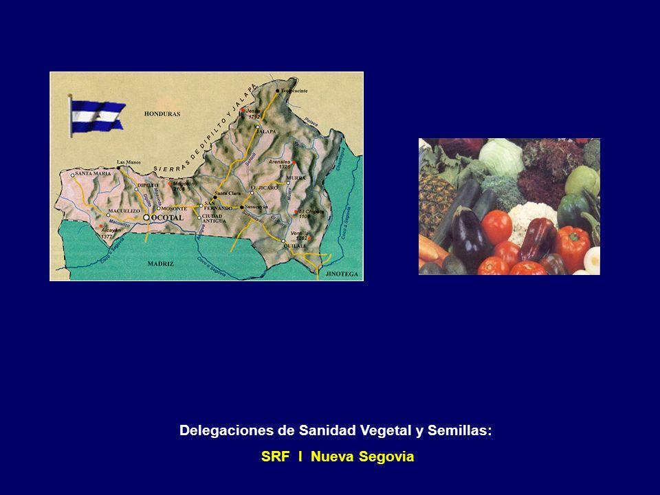 Delegaciones de Sanidad Vegetal y Semillas: SRF I Madriz