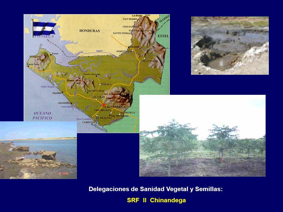 Delegaciones de Sanidad Vegetal y Semillas: SRF I Nueva Segovia