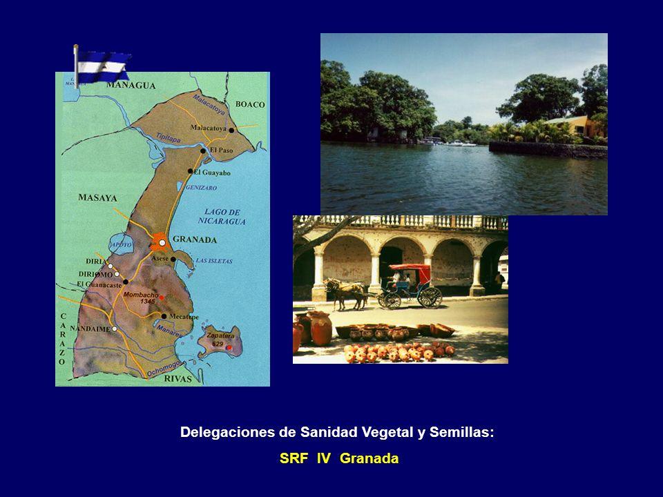 Delegaciones de Sanidad Vegetal y Semillas: SRF II Chinandega