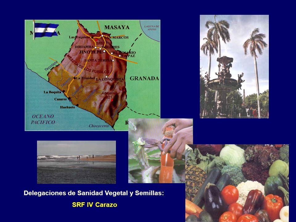 Delegaciones de Sanidad Vegetal y Semillas: SRF IV Granada