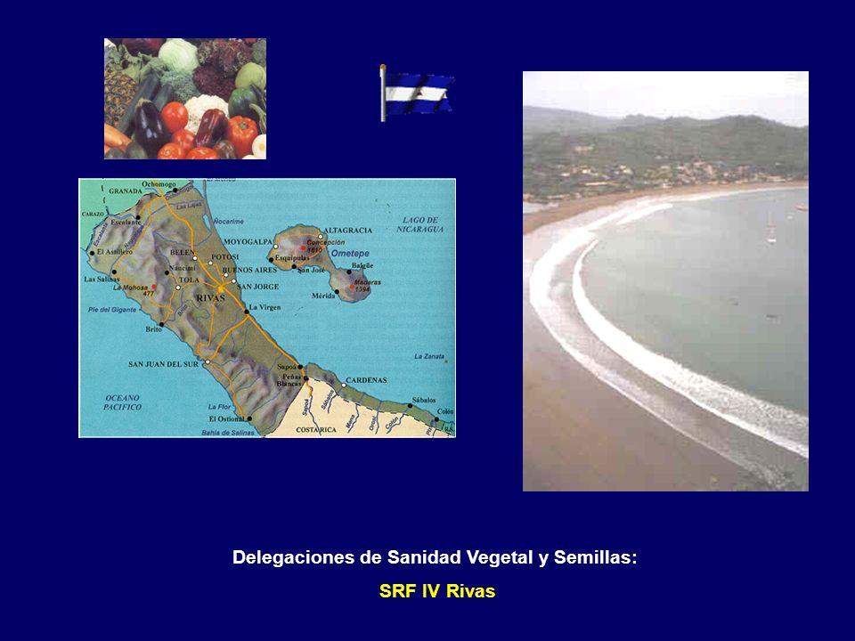 Delegaciones de Sanidad Vegetal y Semillas: SRF IV Carazo