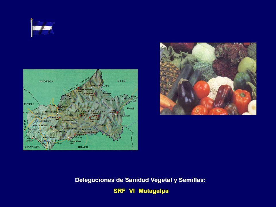 Delegaciones de Sanidad Vegetal y Semillas: SRF IV Rivas