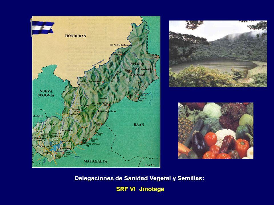 Delegaciones de Sanidad Vegetal y Semillas: SRF VI Matagalpa