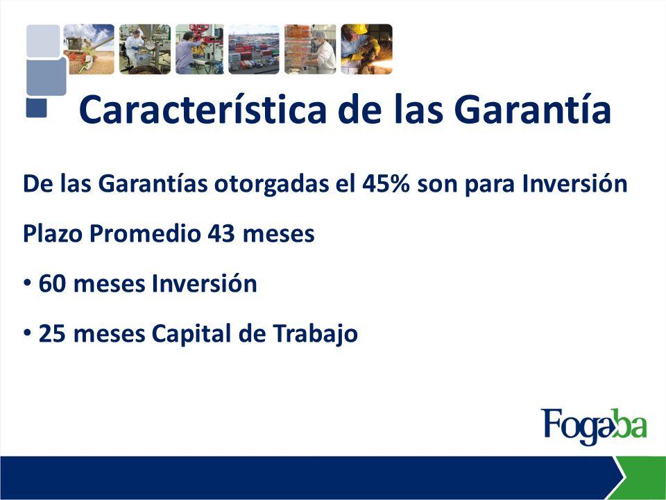 De las Garantías otorgadas el 45% son para Inversión Plazo Promedio 43 meses 60 meses Inversión 25 meses Capital de Trabajo Característica de las Garantía