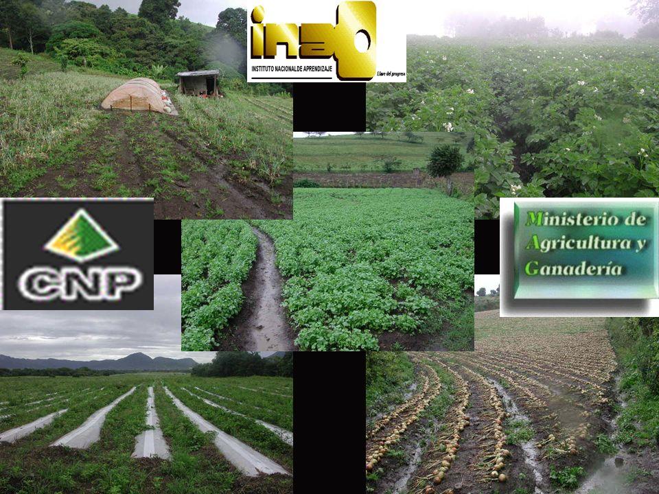 La implementación de programas para asegurar la calidad o inocuidad del sector hortofrutícola, nos permite ampliar nuestro mercado de exportaciones; sin embargo, sigue siendo una amenaza, el resultado que genere el Tratado de Libre Comercio de Centroamérica con E.U.A.