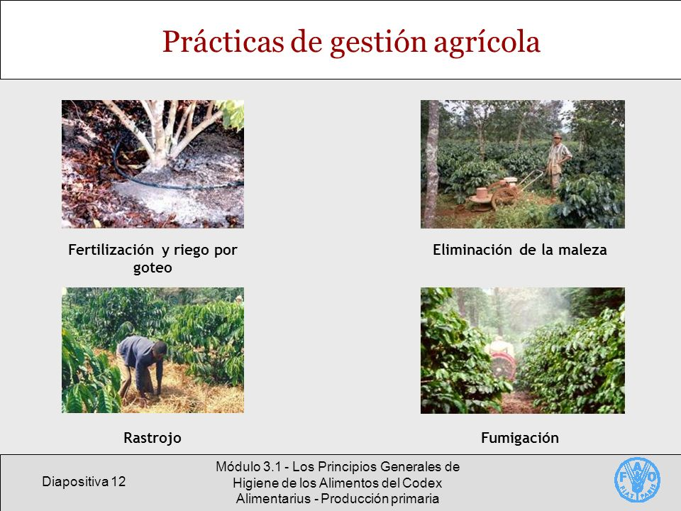 Diapositiva 12 Módulo 3.1 - Los Principios Generales de Higiene de los Alimentos del Codex Alimentarius - Producción primaria Prácticas de gestión agr