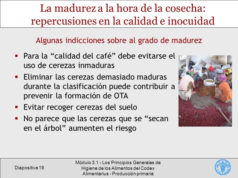 Diapositiva 19 Módulo 3.1 - Los Principios Generales de Higiene de los Alimentos del Codex Alimentarius - Producción primaria La madurez a la hora de