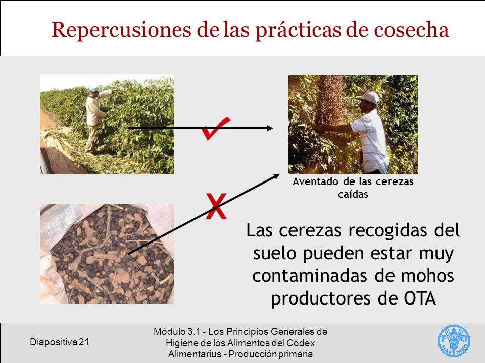 Diapositiva 21 Módulo 3.1 - Los Principios Generales de Higiene de los Alimentos del Codex Alimentarius - Producción primaria Repercusiones de las prá