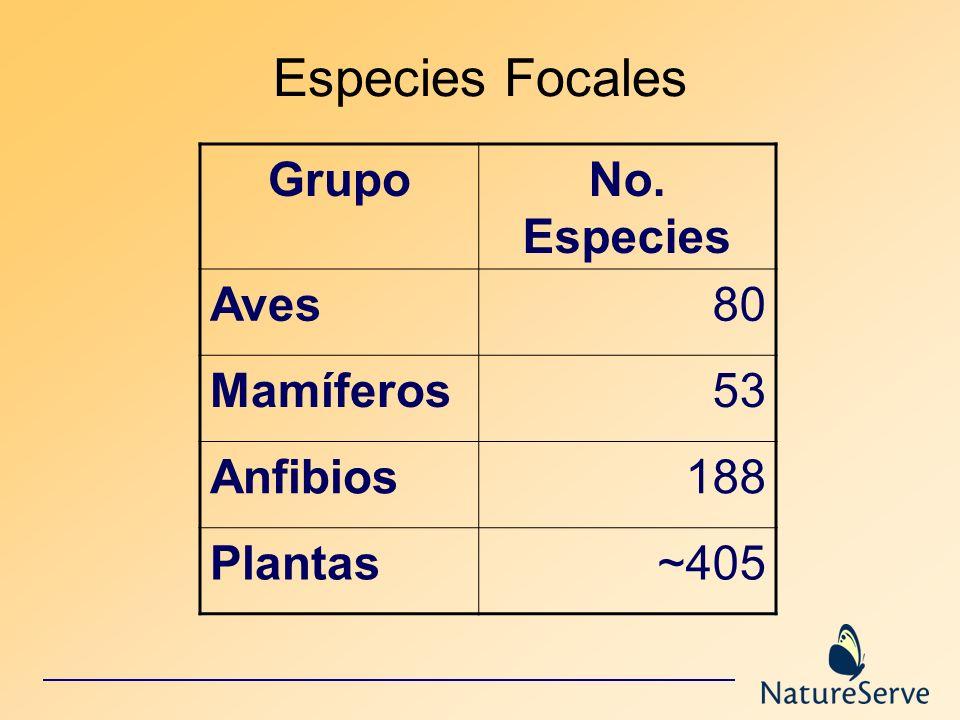 Especies Focales GrupoNo. Especies Aves80 Mamíferos53 Anfibios188 Plantas~405