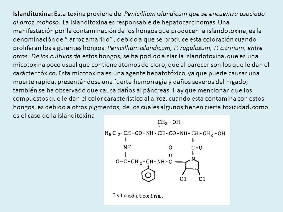 Islanditoxina: Esta toxina proviene del Penicillium islandicum que se encuentra asociado al arroz mohoso. La islanditoxina es responsable de hepatocar