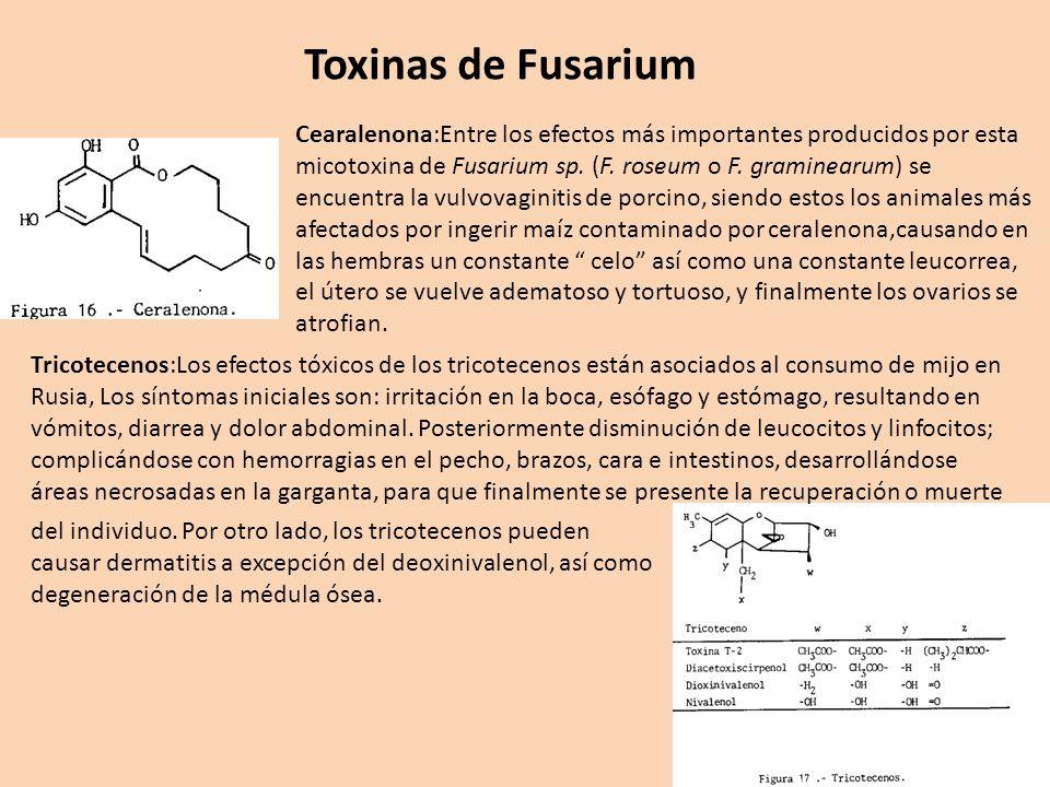 Toxinas de Fusarium Cearalenona:Entre los efectos más importantes producidos por esta micotoxina de Fusarium sp. (F. roseum o F. graminearum) se encue