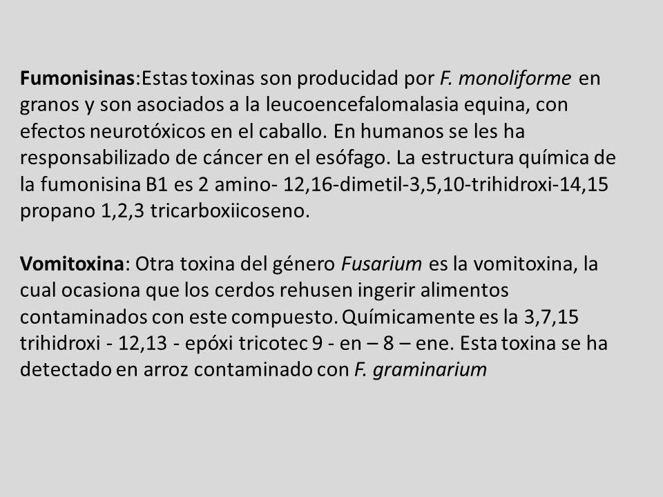 Fumonisinas:Estas toxinas son producidad por F. monoliforme en granos y son asociados a la leucoencefalomalasia equina, con efectos neurotóxicos en el