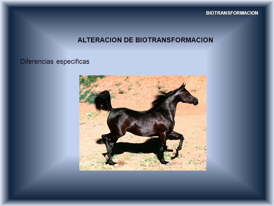 BIOTRANSFORMACION ALTERACION DE BIOTRANSFORMACION Diferencias especificas
