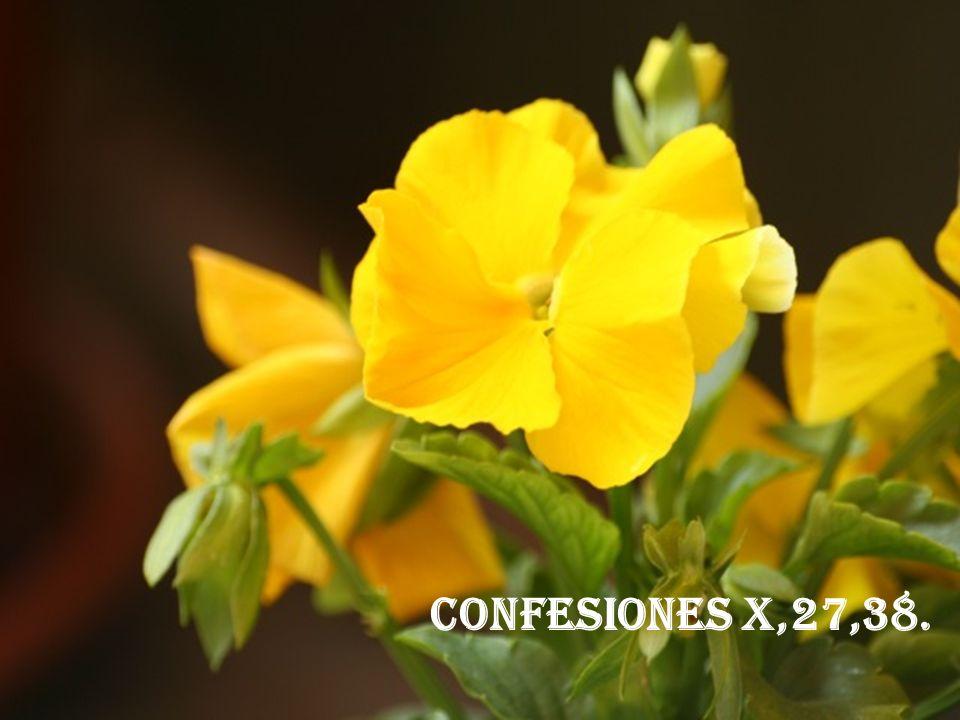 CONFESIONES X,27,38.