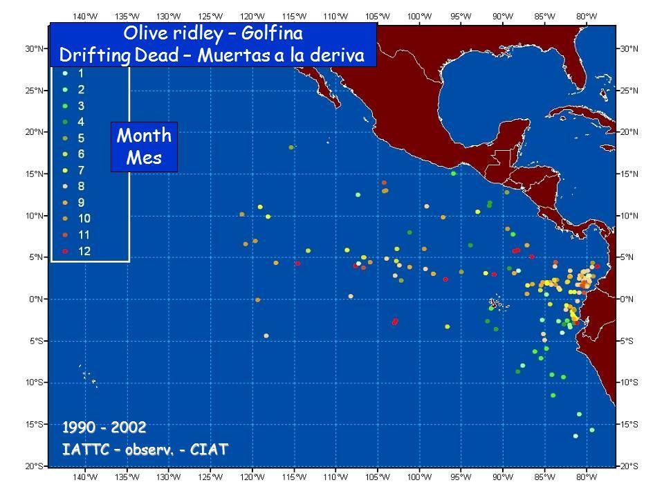 Olive ridley – Golfina Drifting Dead – Muertas a la deriva Month Mes IATTC – observ.