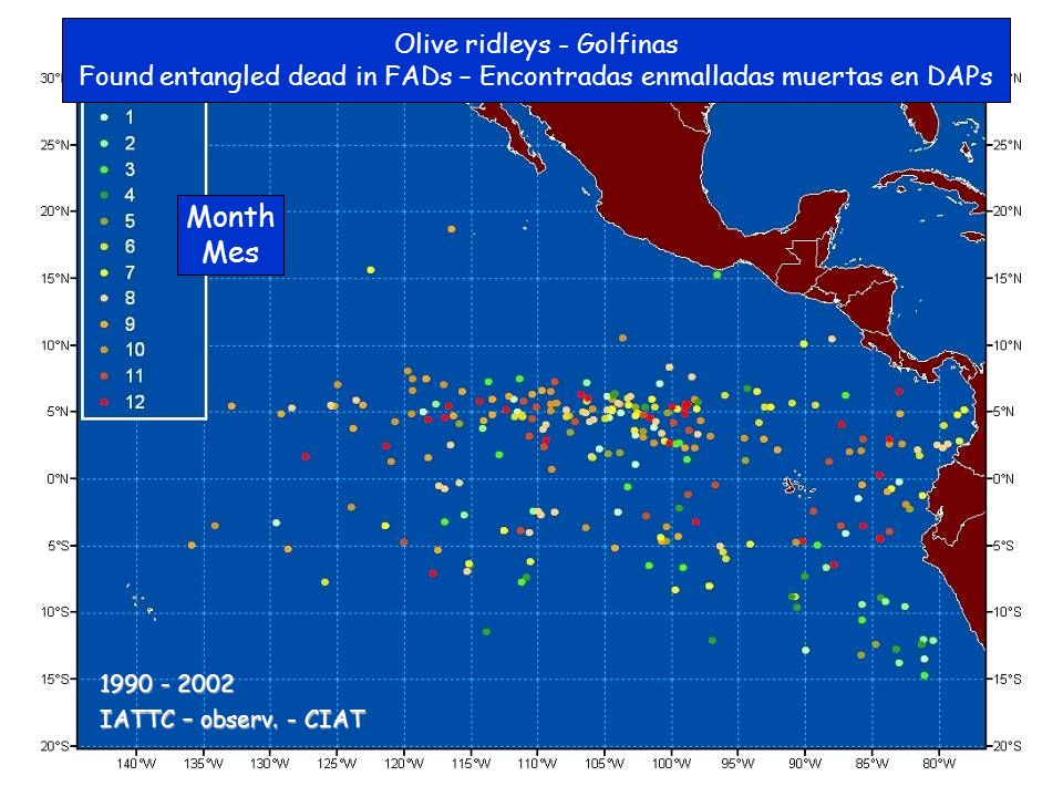 Olive ridleys - Golfinas Found entangled dead in FADs – Encontradas enmalladas muertas en DAPs Month Mes IATTC – observ.