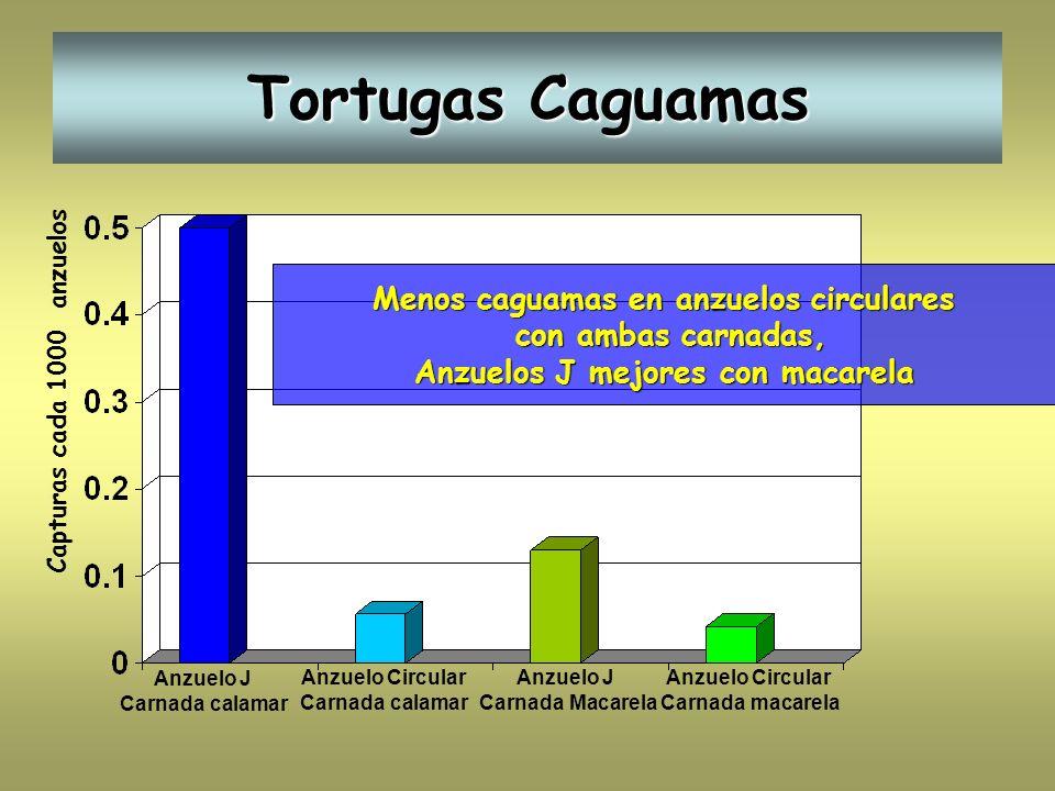 Tortugas Caguamas Capturas cada 1000 anzuelos Anzuelo J Carnada calamar Anzuelo Circular Carnada calamar Anzuelo J Carnada Macarela Anzuelo Circular C