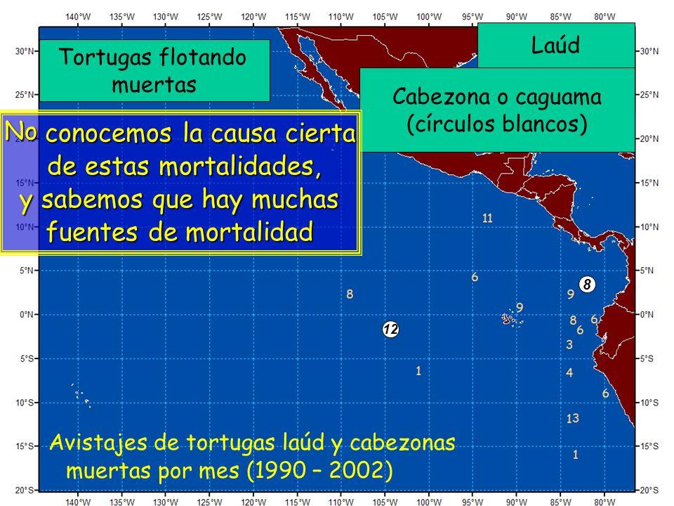 Laúd Cabezona o caguama (círculos blancos) 12 8 Tortugas flotando muertas Avistajes de tortugas laúd y cabezonas muertas por mes (1990 – 2002) No cono