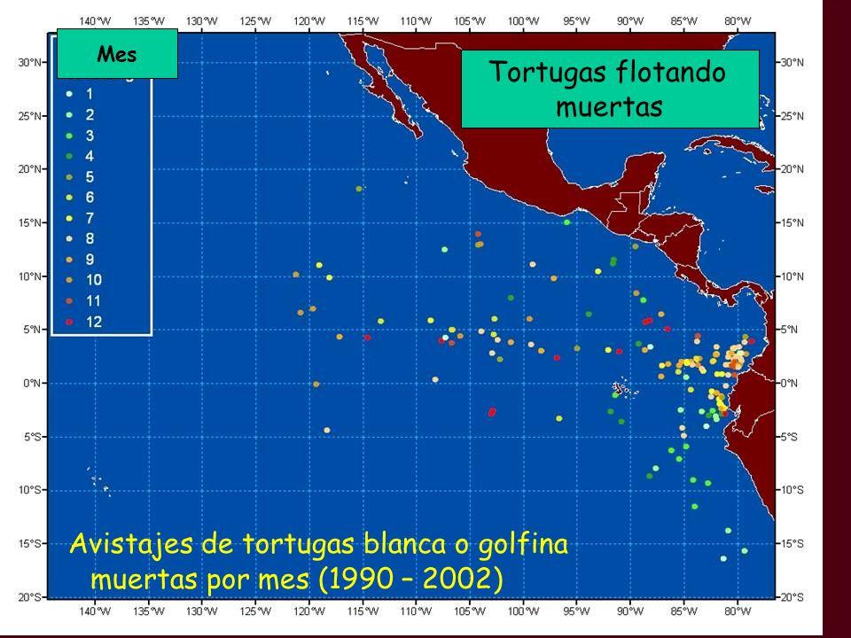 Mes Tortugas flotando muertas Avistajes de tortugas blanca o golfina muertas por mes (1990 – 2002)