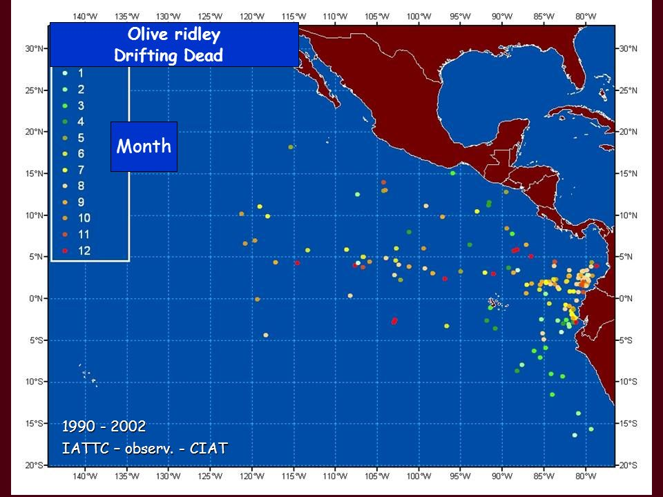 Olive ridley Drifting Dead Month IATTC – observ. - CIAT 1990 - 2002