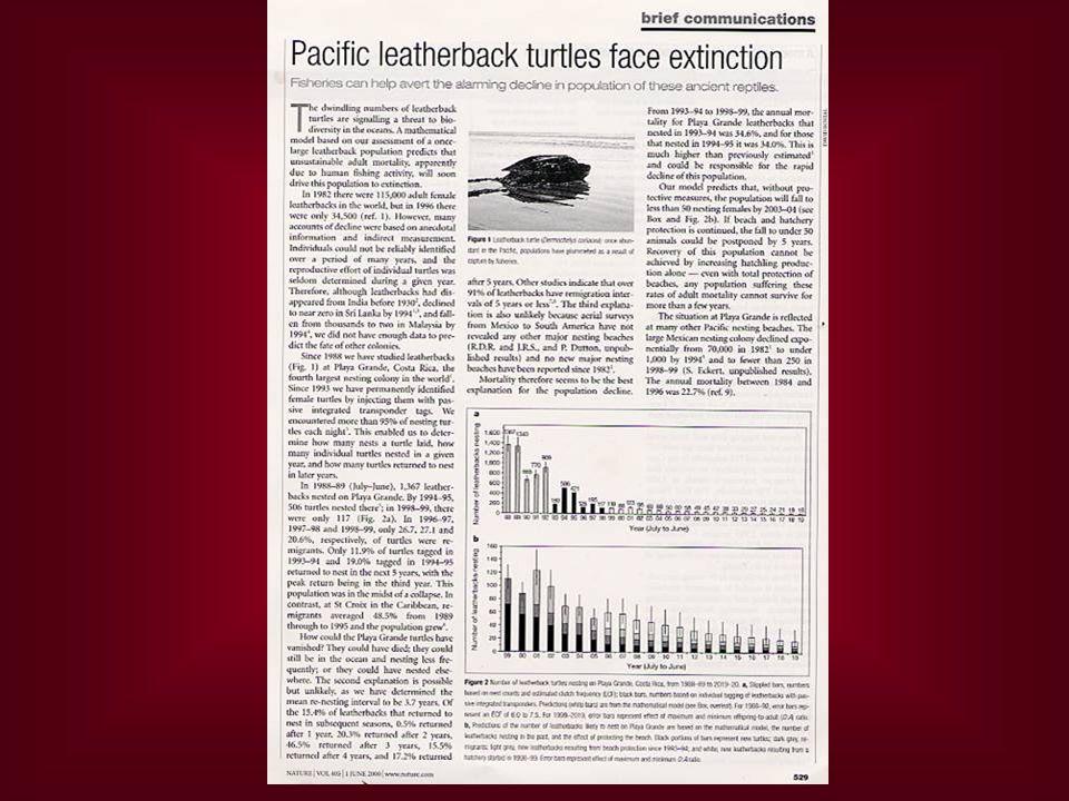 Black turtle Drifting Dead Month (number) IATTC – observ. - CIAT 1990 - 2002