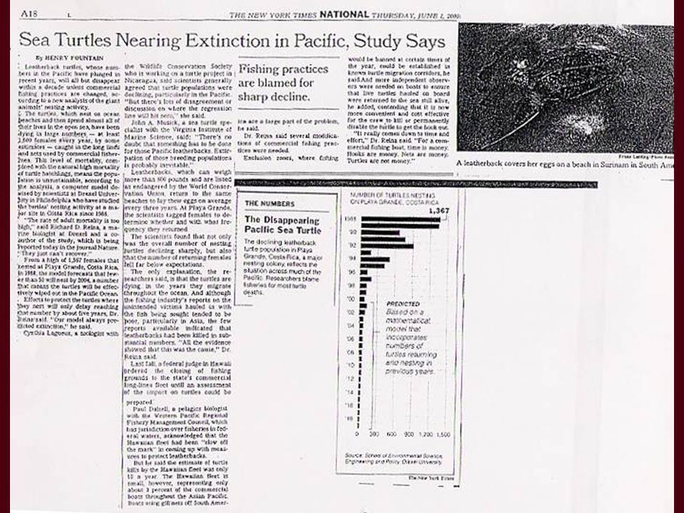 Los abajo firmantes hacemos un llamado a las Naciones Unidas, a los Estados Unidos y a otras naciones para que declaren una moratoria a la pesquería de palangre pelágico del Pacífico, a la de enmalle, y a otras técnicas de pesca que causan mortalidad de tortugas laúd, hasta tanto esas actividades se puedan llevar a cabo sin dañar a la especie ……………………………………………………………………………..
