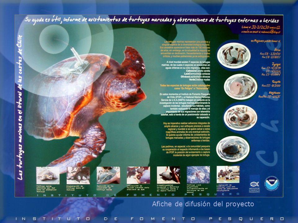 Afiche de difusión del proyecto