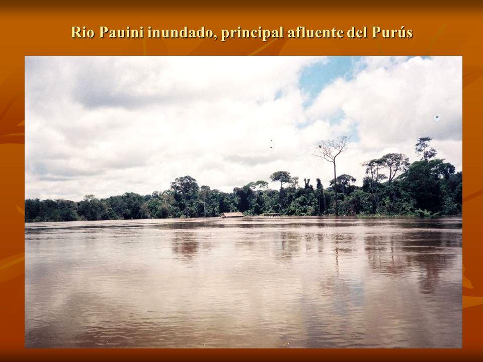 Desobriga en el rio Pauiní.