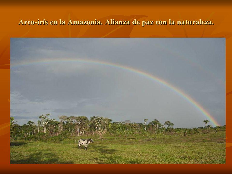 Loro hablador y mono barrigudo, típicos de la selva amazónica.
