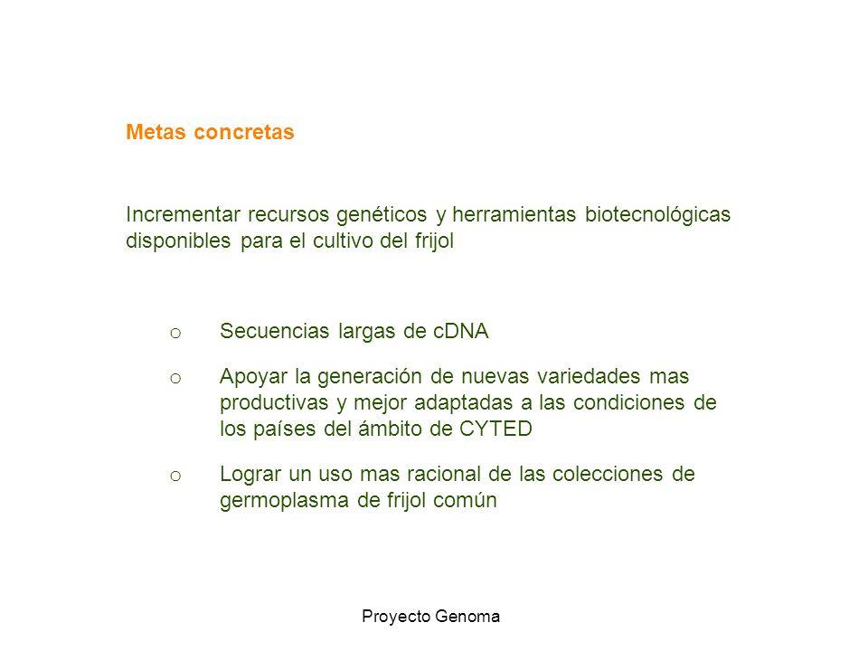 Incrementar recursos genéticos y herramientas biotecnológicas disponibles para el cultivo del frijol o Secuencias largas de cDNA o Apoyar la generació