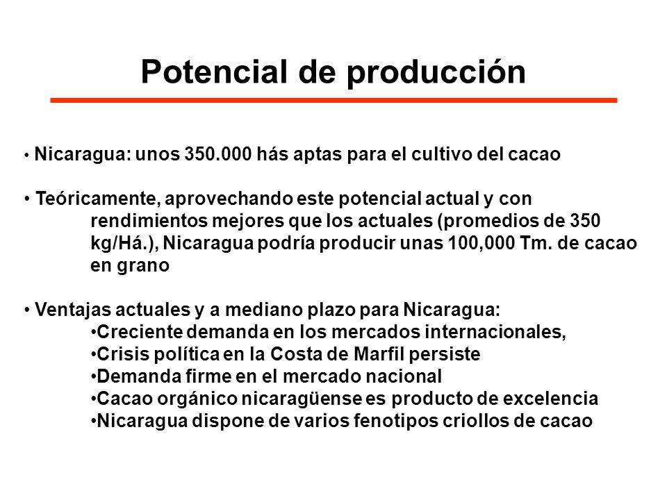 Oportunidades con el CAFTA La comercialización del cacao Nicaragüense tiene oportunidades reales con el CAFTA : Estados Unidos compran un 25% de la producción mundial, con importaciones crecientes, CAFTA no considera cacao como producto sensible para la exportación En el CAFTA, el cacao es de libre comercio, sin restricciones arancelarias y de acceso inmediato al mercado después firma del CAFTA Cacao: cultivo estratégico o substitutivo para productores de cultivos tradicionales (que son expuestos a supuestos cambios y pérdidas ante el CAFTA) Además tiene un efecto favorable en la conservación ambiental (cacao es considerado como cultivo agroforestal)