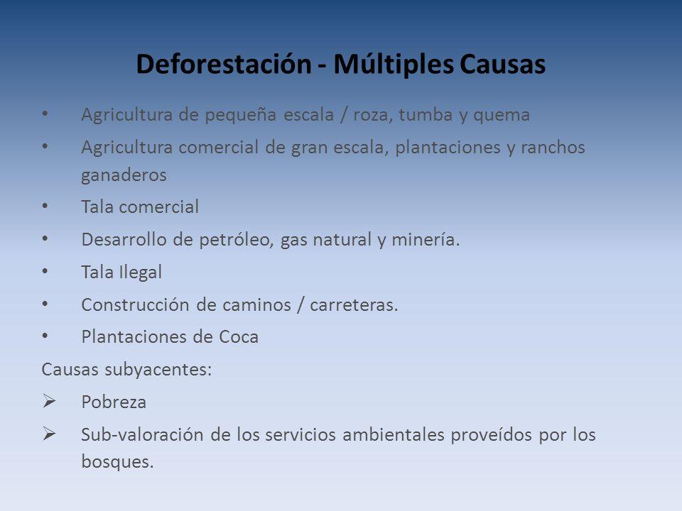 Deforestación - Múltiples Causas Agricultura de pequeña escala / roza, tumba y quema Agricultura comercial de gran escala, plantaciones y ranchos ganaderos Tala comercial Desarrollo de petróleo, gas natural y minería.