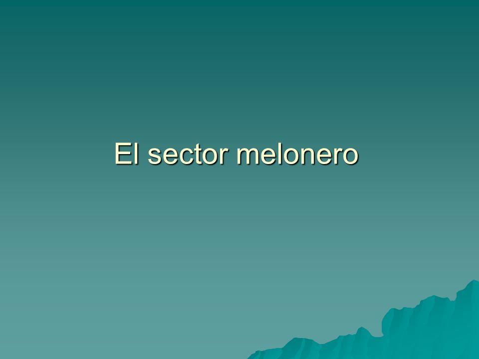 El sector melonero