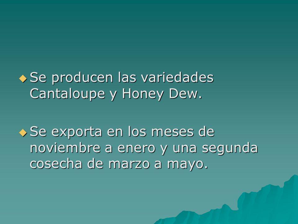 Se producen las variedades Cantaloupe y Honey Dew. Se producen las variedades Cantaloupe y Honey Dew. Se exporta en los meses de noviembre a enero y u