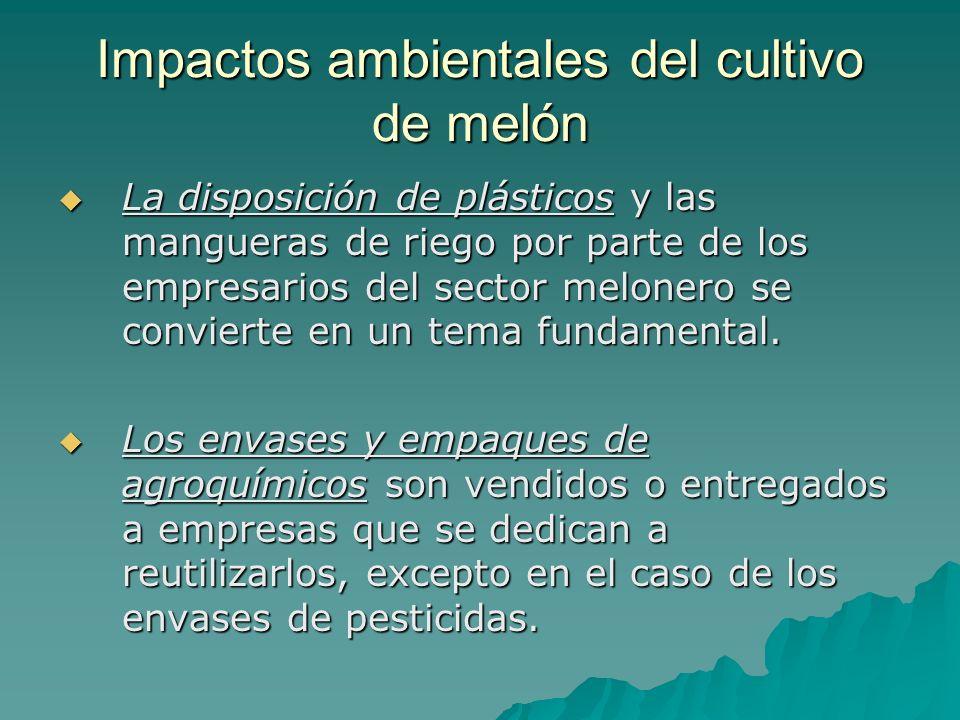 Impactos ambientales del cultivo de melón La disposición de plásticos y las mangueras de riego por parte de los empresarios del sector melonero se con
