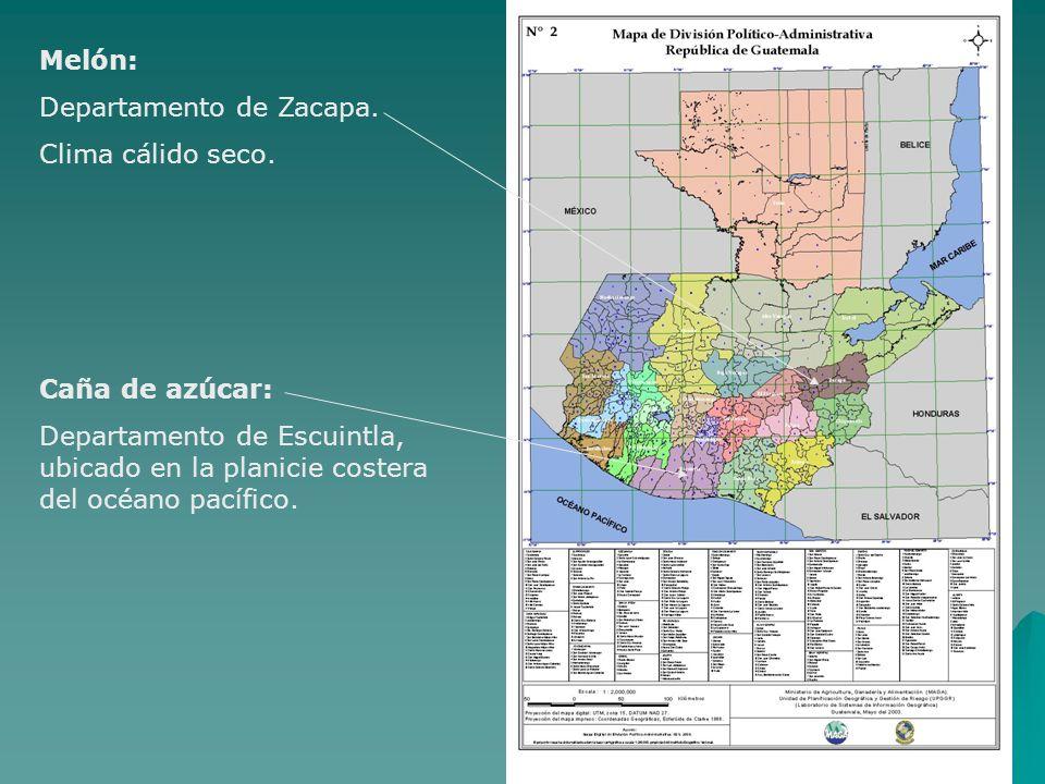 Melón: Departamento de Zacapa. Clima cálido seco. Caña de azúcar: Departamento de Escuintla, ubicado en la planicie costera del océano pacífico.