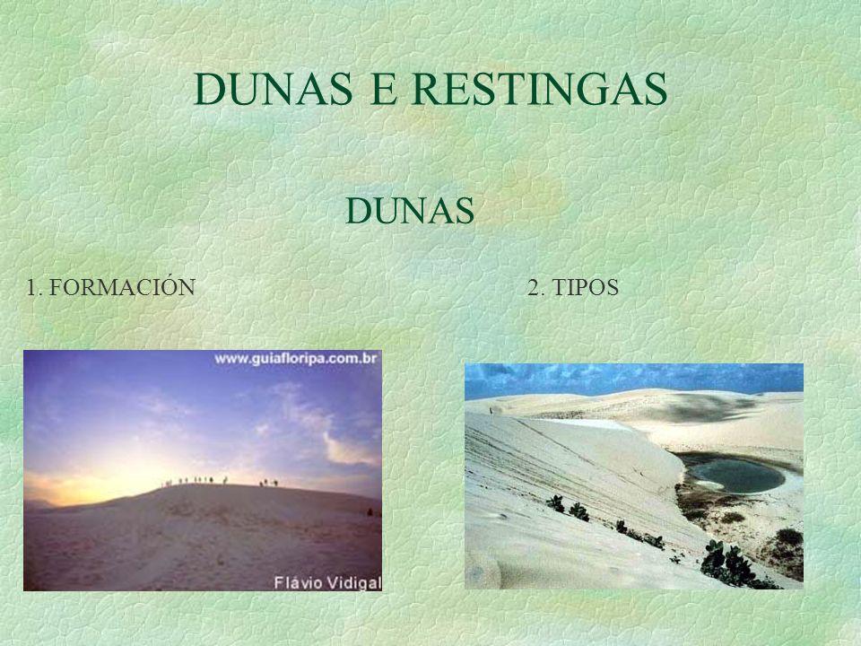 DUNAS E RESTINGAS DUNAS 1. FORMACIÓN 2. TIPOS
