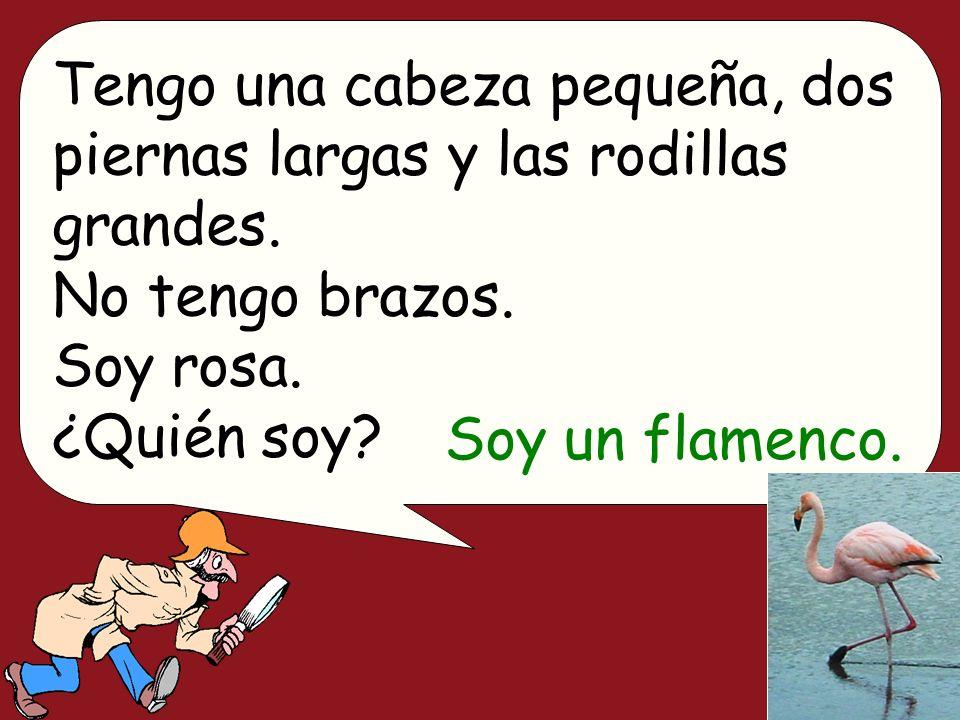 Tengo una cabeza pequeña, dos piernas largas y las rodillas grandes. No tengo brazos. Soy rosa. ¿Quién soy? Soy un flamenco.